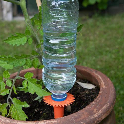 Cat Repellent For Garden Homebase Garden Ftempo