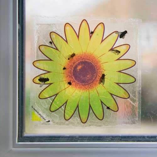 Window fly stickers attractive yet practical fly trap attracts kills flies